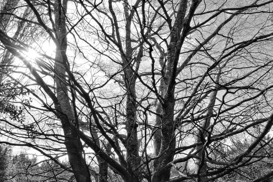 skeleton 🤔🤔😉😉😇😇 Forestwalk Nzscenery Bushwalking Kiwi Clicker NZ Nature Walking Around Naturelovers Nature Photography EyeEm Nature Lover EyeEm Best Shots Eye4photography  Tadaa Community New Zealand Scenery Photography Blackandwhite Tree Branch Bare Tree Tree Trunk Forest Sunlight Sky Tree Canopy  Plant Life Treetop