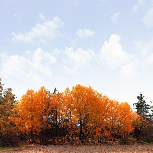 Günaydınlar. Vscocam VSCO Autumn Tree Leaf Good Shot Izkiz Myriagon Vscooz Instasyon Instamood Follow @myriagon ✏ @pearlcyprus ✏ @kardinalmelon ✏ @insta_reaality ✏ @instagood ✏ @instasyon ✏ @nala_rinaldo ✏ @ipoenkgraphic ✏ @canon_photos ✏ @canoncameras ✏