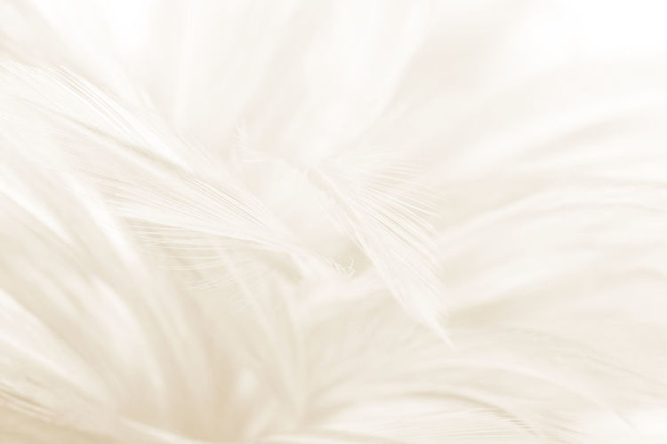Backgrounds White Color Full Frame Softness No People Close-up Textured  Pattern Abstract Fragility Vulnerability  Textile Elégance Nature Beauty In Nature Simplicity Studio Shot Feather  Copy Space Extreme Close-up Lightweight Abstract Backgrounds Textured Effect