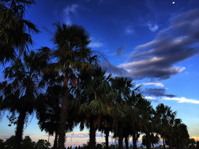 Beauty In Nature Blue Cloud - Sky Idyllic Nature Outdoors Palm Leaf Palm Tree Tranquil Scene Tranquility