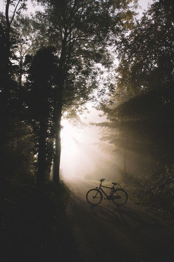 This bike always takes me to the most beautiful spots! 🚲 | Bicycle Stationary Transportation No People Outdoors Dawn Of A New Day Gloomy Silhouette Misty Morning EyeEmNewHere Foggy Morning Full Length Sunbeam On Tree Sunbeam Sunbeams Through Tree Burst Of Light Forest Bicycles Bicycle Trip Bicycle Adventuring Teenager Exploring New Ground Exploring EyeEm Nature Lover EyeEm Best Edits Let's Go. Together.