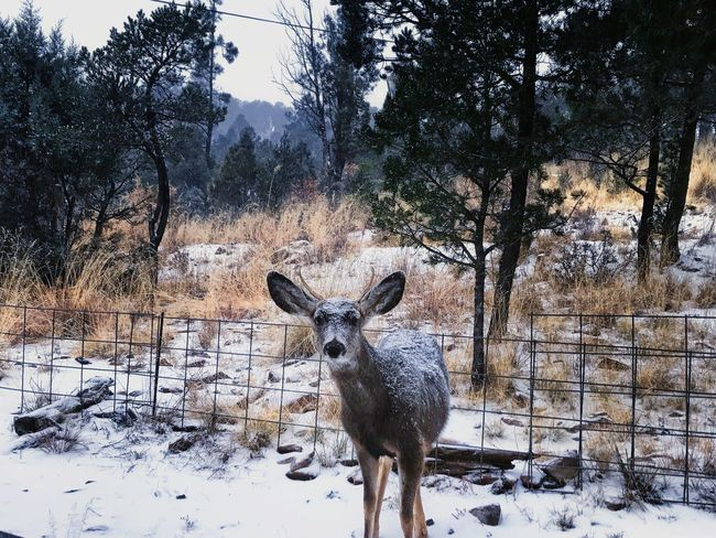 Tree Winter Snow Cold Temperature Animal Themes Nature Field One Animal No People Mammal Animals In The Wild Deer Day Outdoors Antler Sky