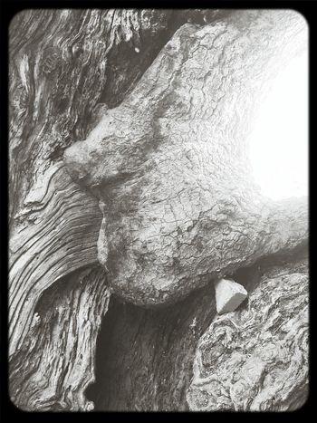 Hugging A Tree Black & White Nature