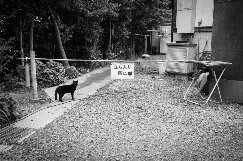 Japan Monochrome Cat Streetphotography Phtographer Snapshots Of Life Snap Art 日本 福井県 写真家 スナップ モノクロ Artな写真 ねこ I Am Photographer EyeEmBestPics Helloworld Blackandwhite