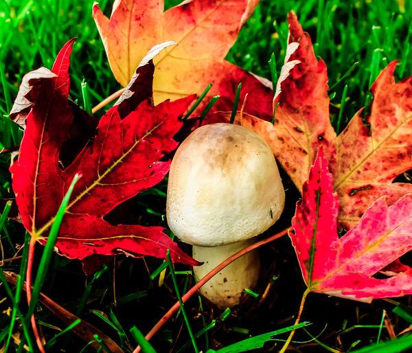 Fall Leaves Fallcolors Autumn Collection Autumn 2016 Fall Collection Autumn Fall Colors Nature Fall Northern California Beatiful Nature Diamond Mafia Photography Lake Shastina C.a