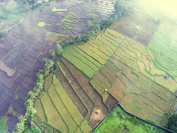 SkyView of rice fields DJI X Eyeem EyeEm Best Shots EyeEmNewHere EyeEm Selects Drone  Dronephotography Midrone Agriculture Nature Full Frame Field Pattern Beauty In Nature No People Shades Of Winter An Eye For Travel