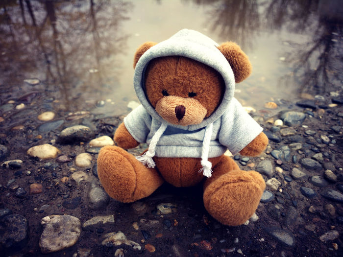 Teddy in nature Alone Animals In The Wild Baby Bear Fashion Nature Plush Pond Soft Stuffed Toy Teddy Animal Animal Themes Animal Wildlife Childhood Cute Hoodie One Animal Outdoors Play Puddle Stuffed Animals Sweatshirt Teddy Bear Toy