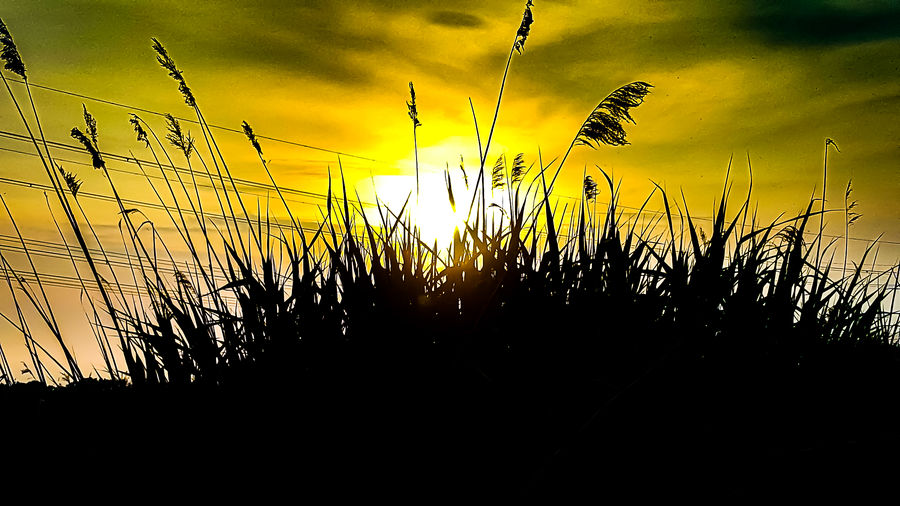 Sunset_collection Silhouette Nature No People Sunset Outdoors Growth Beauty In Nature Sky Close-up Nature Sunsetsky Sunsets Sunsetsilhouettes Sunset And Clouds  Cloud - Sky Sunsets Of Eyeem Silhouette Scenics Beauty In Nature Sunset And Clouds  Holland 💕 Sunset_collection