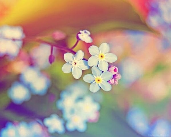 Flower Photography 🌷 Flowers 🌹 Flowers,Plants & Garden Flower Collection We Heart It