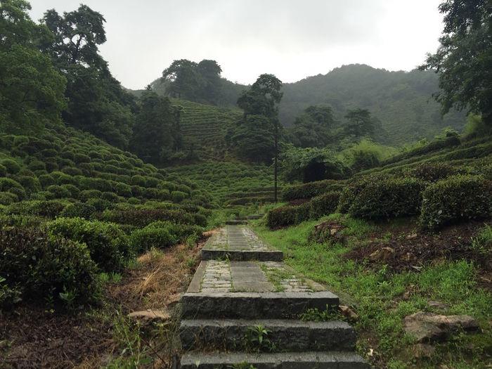 Walking through the tea plantation near Hangzhou | 2016 Beauty In Nature Day Detox Green Color Hangzhou Landscape Lush Foliage Mountain Nature No People Outdoors Scenics Sky Tea Tea Crop Tea Village Tranquil Scene Tranquility Tree