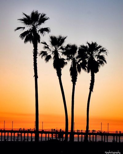 Palm trees by sea
