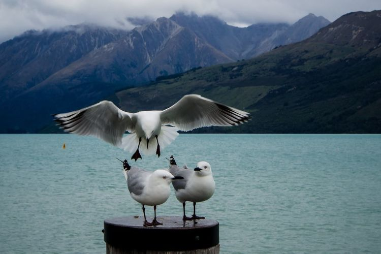 Seagulls perching on sea on wooden post