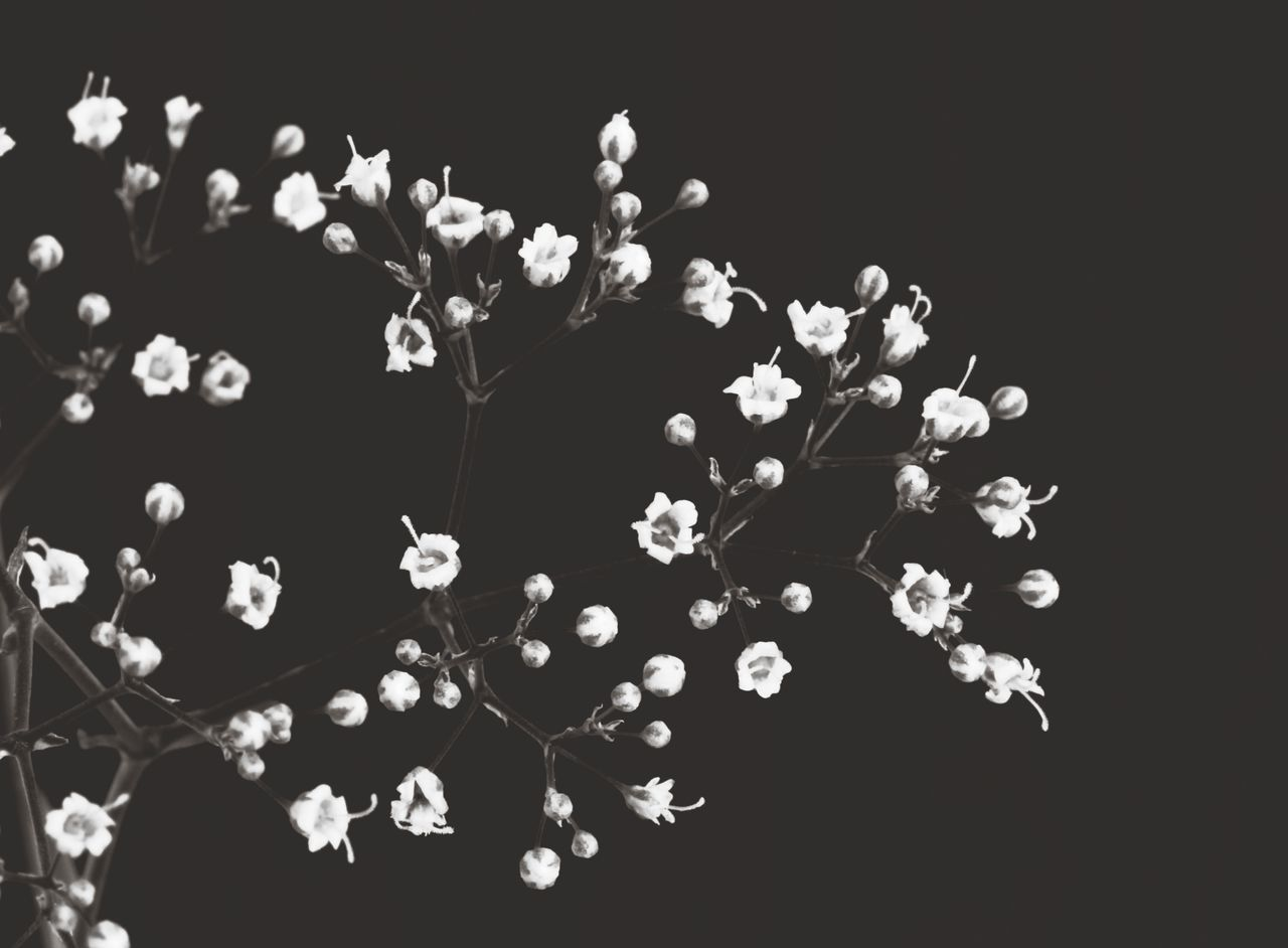HIGH ANGLE VIEW OF FLOWERING PLANTS AGAINST BLACK BACKGROUND
