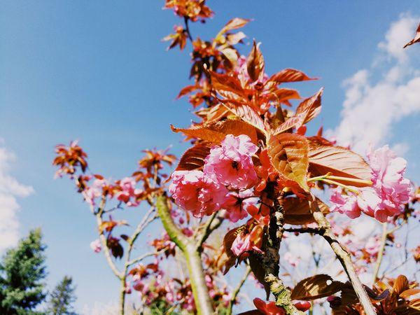 Details Of Nature Detail Outdoors Nature VSCO Vscogrid No People Close-up Springtime Spring Day Sky