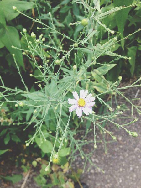 FlowerOutsideDevilslake Wisconsin