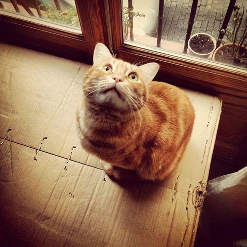 Good morning! #monday #lunes #lazy #week #semana #buendia #cat #catsofinstagram #catstagram #box #window #ventana #igscout #_wg #instapic #instagramer #insta_crew #instamillion #tagstagramers #instago #tagsforlikes #photooftheday #instagroove #igersmadrid Instago Elexorcista Insta_crew Cat Igscout Tagsforlikes Instagramer Window Catsofinstagram Monday _wg Lazy Instagroove Photooftheday Instapic Box Instamillion Picoftheday Tagstagramers Catstagram Week Ventana Buendia Latergram Igersmadrid Lunes Semana