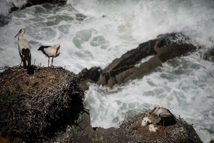 birds nest on beach