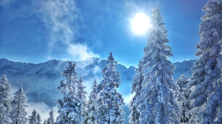 A cold wind was blowing from the North, and it makes the rustle like living things. -G.R.R. Martin Nature Sky Tree Beauty In Nature Blue No People Cold Temperature Sun Cloud - Sky Outdoors Landscape Snow Mountain Snowing Holiday Day First Eyeem Photo EyeEmNewHere