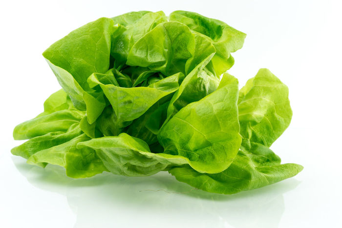 Food Stories Aquaponic Close-up Food Freshness Green Green Green Color Healthy Healthy Eating Hydroculture Indoors  Lettuce No People Organic Plant Pot Raw Food Roots Salad Show Us Your Takeaway! Colour Of Life Still Life Studio Shot White White Background