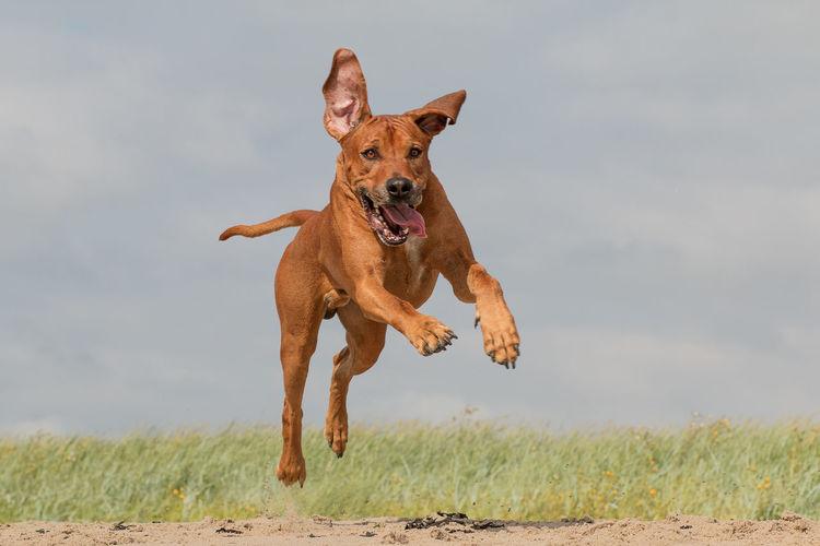 Dog running on a field