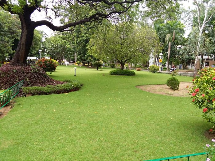 Beauty In Nature Branch Day Flower Grass Green Color Growth Lawn Nature No People Outdoors Park - Man Made Space Plant Rainy Days Tree First Eyeem Photo