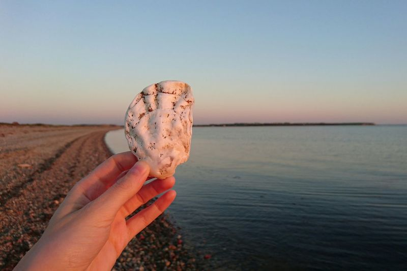 Cropped hand holding seashell at beach against sky