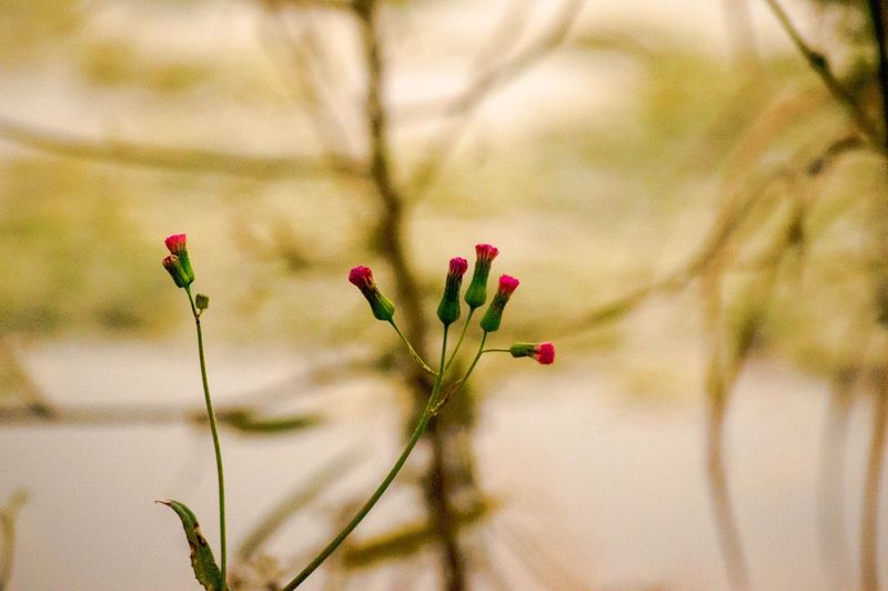 EyeEm Selects Flower Nature Plant Growth Fragility Springtime Beauty In Nature