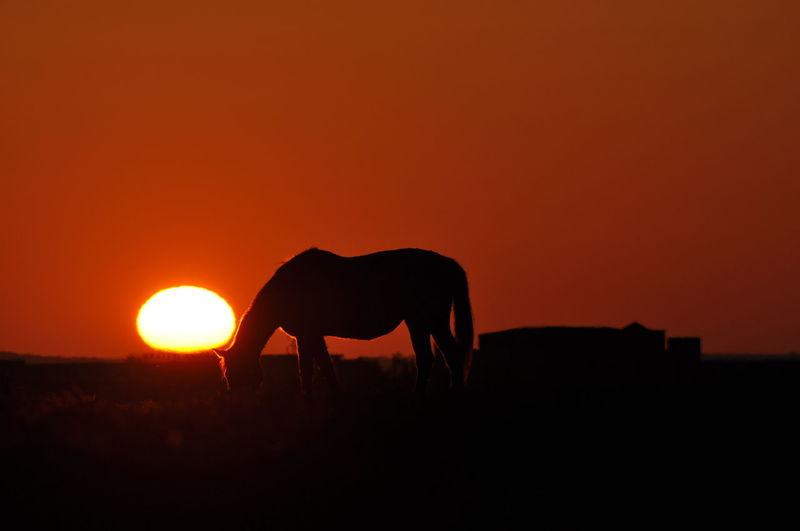 Silhouette horse standing on field against orange sky
