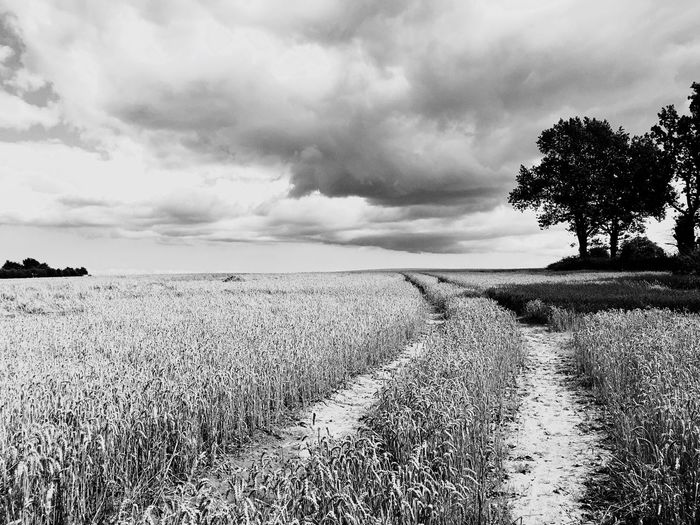 Field Sky Cloud - Sky Landscape Agriculture Nature Growth Tranquility Scenics Tranquil Scene Beauty In Nature Nature Agriculture Rural Scene Outdoors Day No People Tree Grass Plant Cereal Plant Storm Cloud