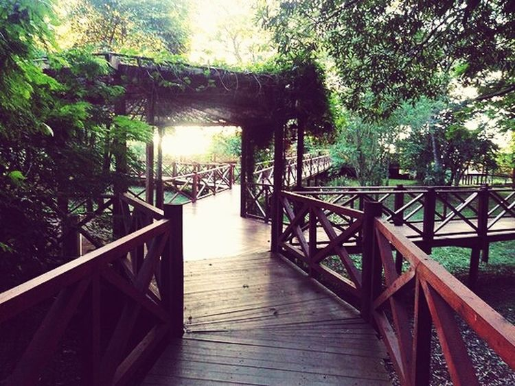 Village Cataratas Hotel Lodge Selva Iryapú Puerto Iguazu Misiones, Argentina Forest Iryapú Forest Photography Jungle Footpaths Tree Nature Railing Day No People Wood - Material Outdoors Steps Vacations Built Structure Beauty In Nature Scenics Sea Architecture