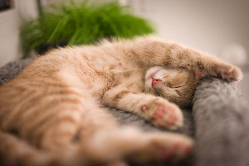 Pets Kitten