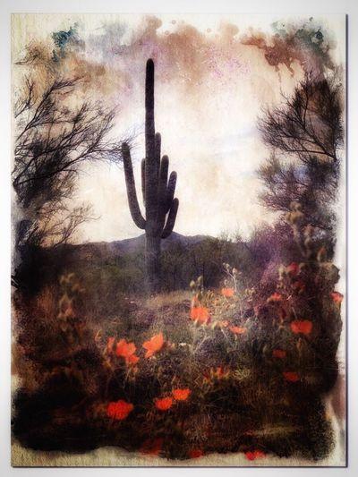 Saguaro Outdoors Saguaro Saguaro National Park Cactus Penstemon Wildlife & Nature Desert Sonoran Desert