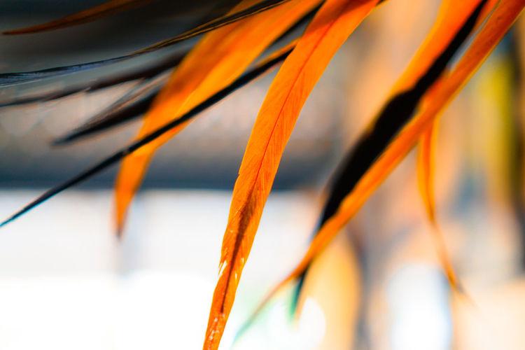 Close-up of orange plant
