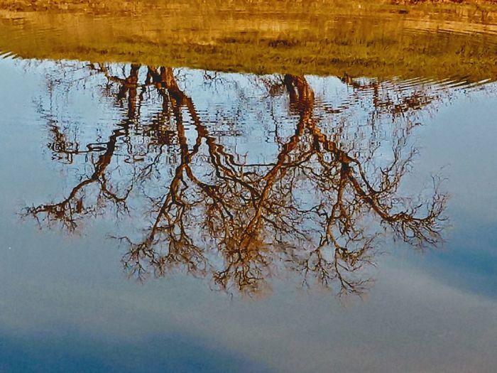 Humblebeauty Fresh On Eyeem  Morning Sun Lake Puddle Branch Standing Water Reflection Lake Countryside Marsh Wetland