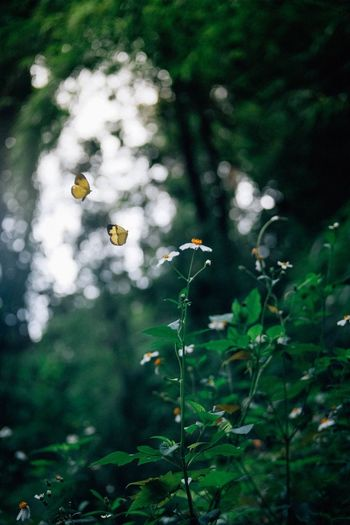 Butterfly and flower Plant Growth Flower Nature Flowering Plant No People Beauty In Nature Freshness Fragility Close-up