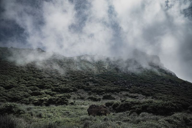 Cloud - Sky Beauty In Nature Nature Sky No People Day Tranquility Environment Outdoors Non-urban Scene Tree Tranquil Scene Growth Land Idyllic Power In Nature Scenics - Nature Landscape Plant Mountain