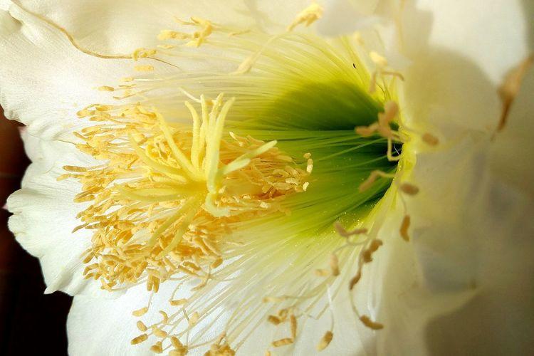 fiore del