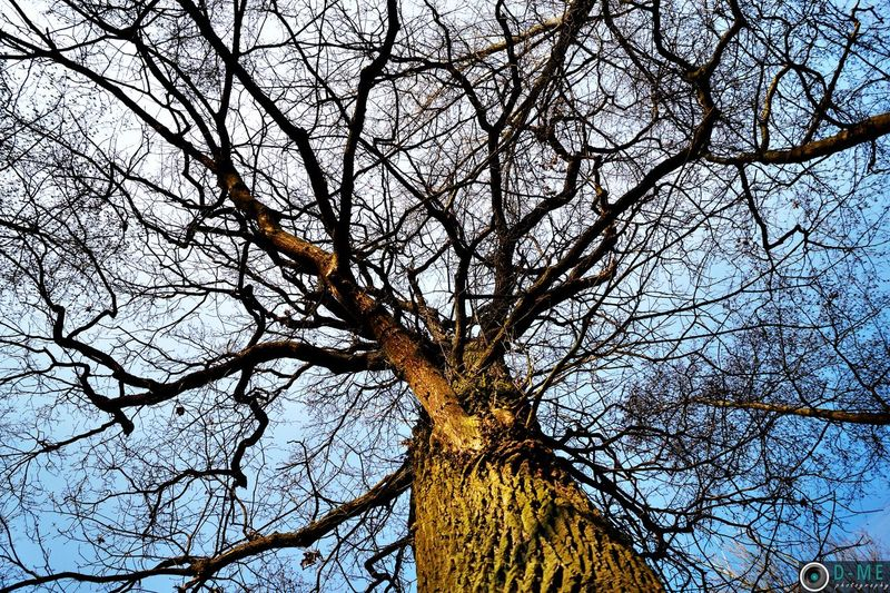 Trees Haspengouw Nature D-ME Photography Hanging Out Taking Photos Discover Your City Wood Sky And Trees