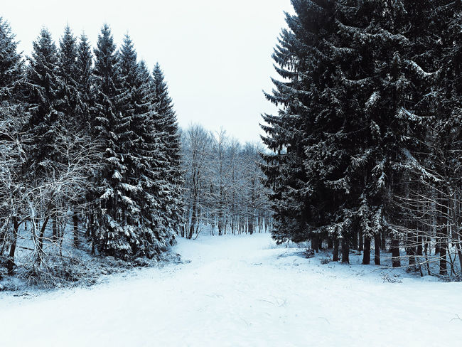 Beauty In Nature Cold Temperature Day Landscape Nature No People Outdoors Snow Tree Winter