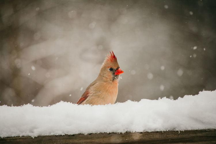 Bird flying over frozen lake during winter