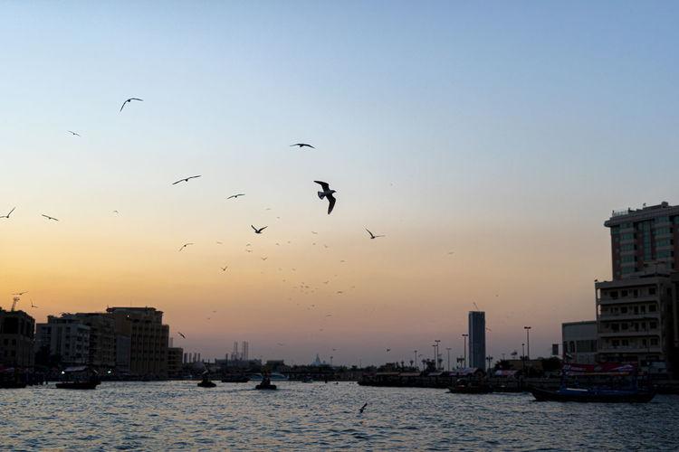 Birds flying over sea in city