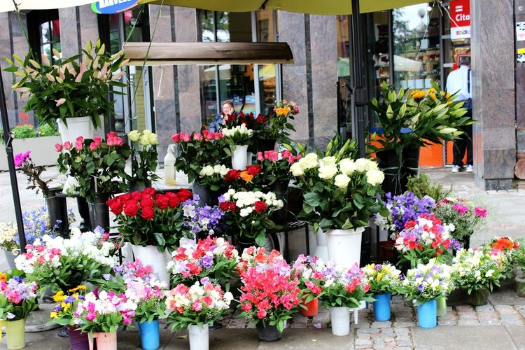 Vecriga Flowers Beautiful