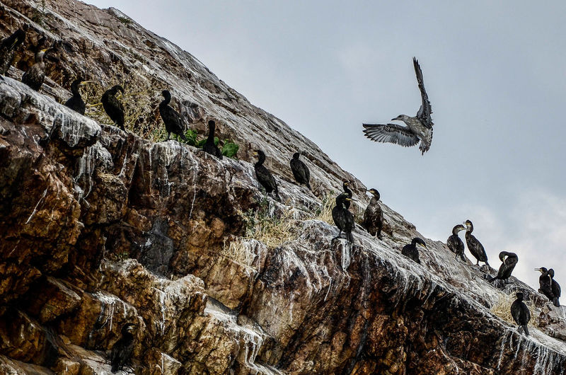 Low Angle View Of Cormorants Perching On Cliff Against Sky