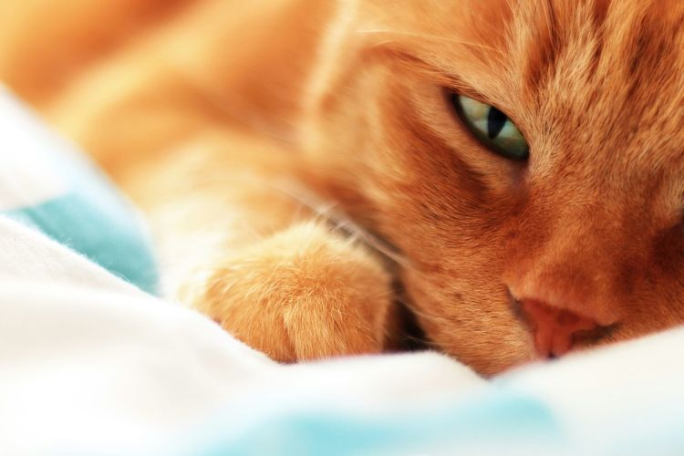 Close-up of cat lying on bed