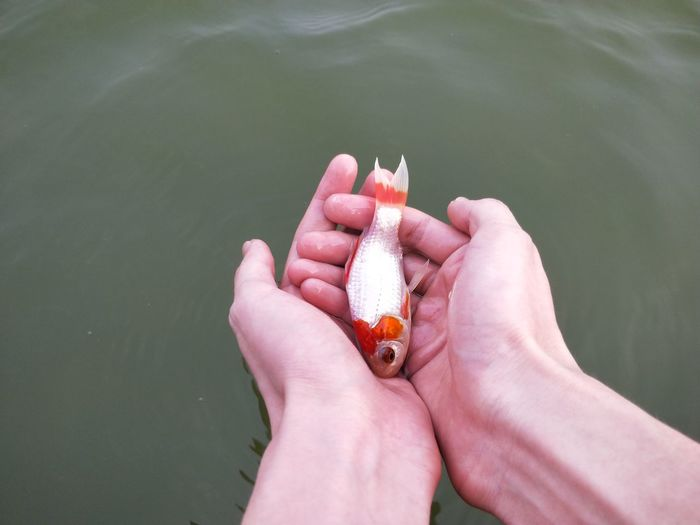 Cropped hands holding dead fish at lake