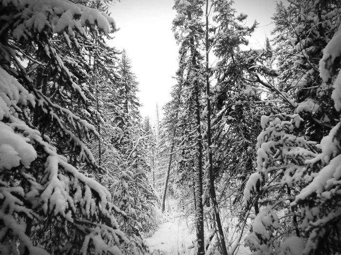 Winter EyeEm Nature Lover Black And White Snow