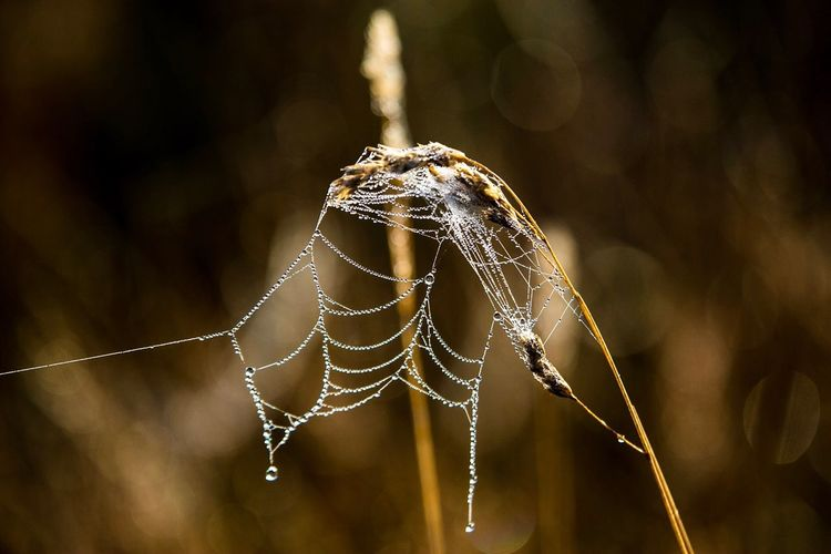 Close-Up Of Wet Spider Web On Dead Plant