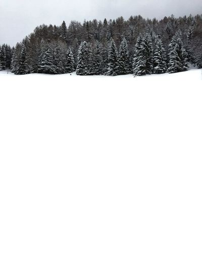 Fiesch Switzerland Snow Winter Cold Temperature Tree Nature Pine Tree Forest White Color Field Snowing Landscape Spruce Tree Outdoors Frozen Scenics Fir Tree Beauty In Nature Mountain No People Polar Climate