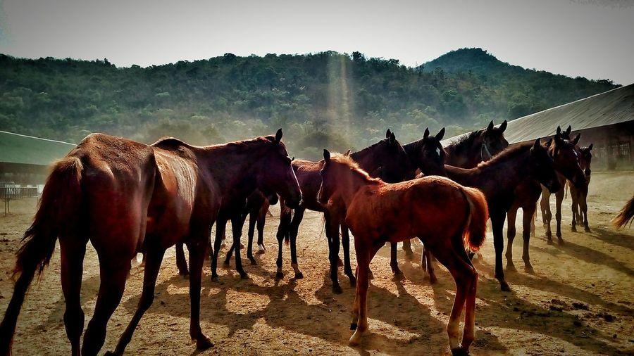 ม้าน่ารัก ฝูงม้า Horse First Eyeem Photo
