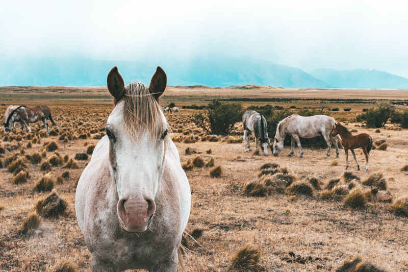 Horse portrait with other horses and a foal in the back